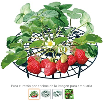 huerta I protege la fruta
