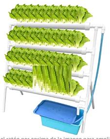 Kit de Cultivo hidropónico
